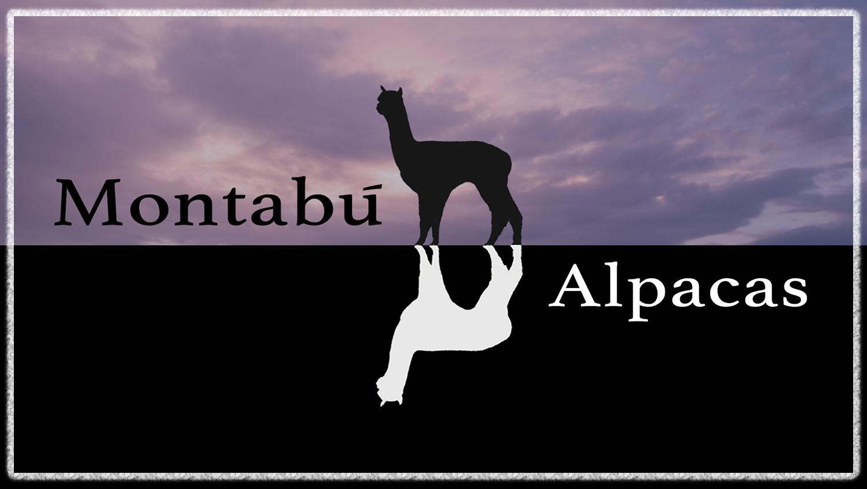 montabu_alpaca