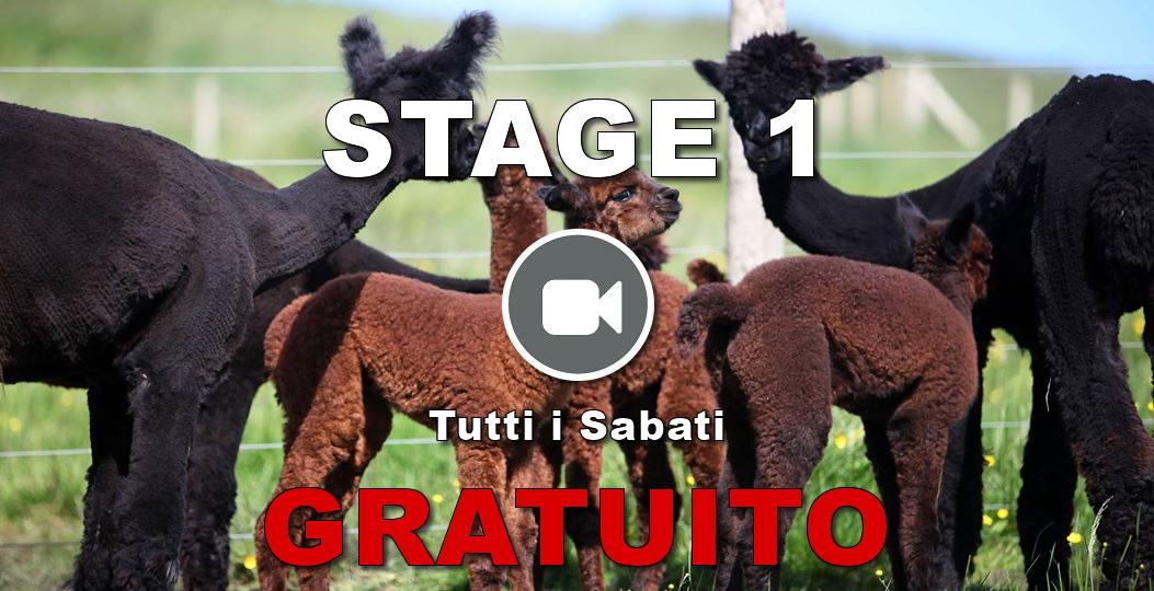 stage1_tutti i sabati